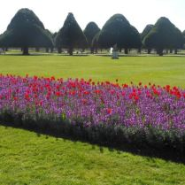 Tulips and trees
