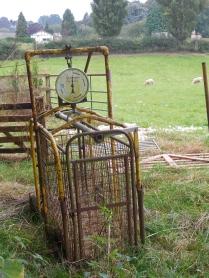 A Pig Scale in a sheep field?